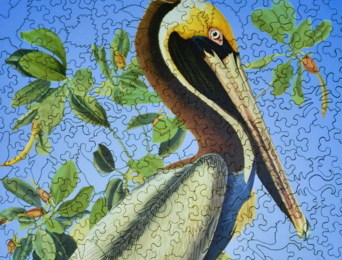 Brown Pelican - Liberty Puzzles - 8