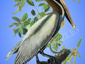 Brown Pelican - Liberty Puzzles - 1