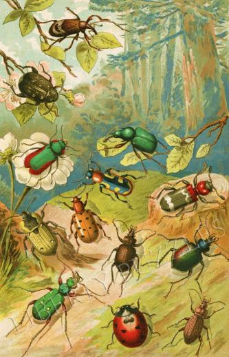 Beetles - Liberty Puzzles - 9