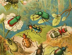 Beetles - Liberty Puzzles - 1