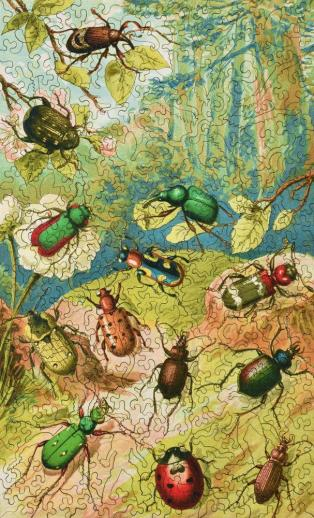 Beetles - Liberty Puzzles - 10
