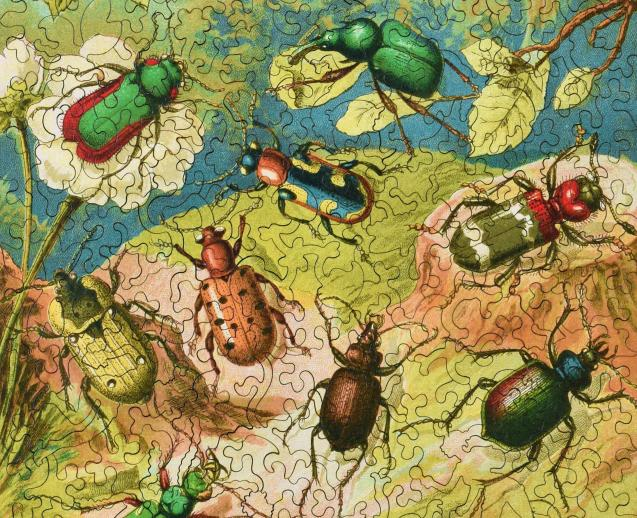 Beetles - Liberty Puzzles - 11