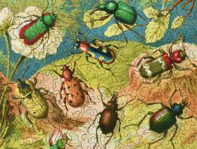 Beetles - Liberty Puzzles - 3