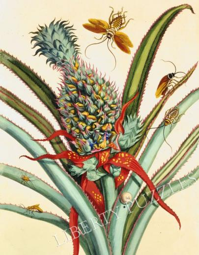Pineapple with Insects - Liberty Puzzles - 7