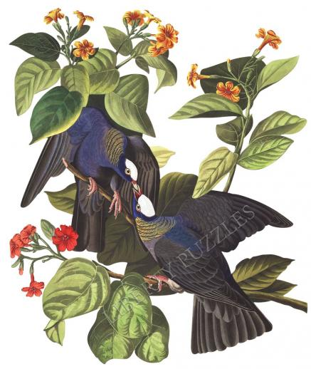 White-Crowned Pigeon - Liberty Puzzles - 8