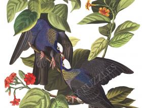 White-Crowned Pigeon - Liberty Puzzles - 1