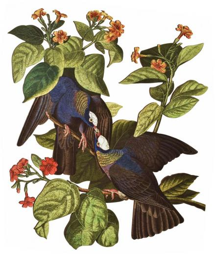 White-Crowned Pigeon - Liberty Puzzles - 9