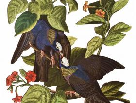 White-Crowned Pigeon - Liberty Puzzles - 2