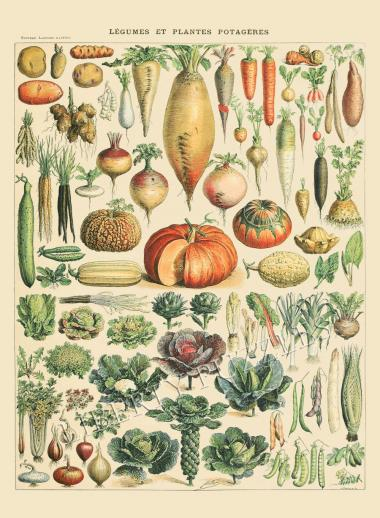 Vegetables and Plants - Liberty Puzzles - 10