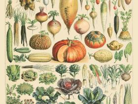 Vegetables and Plants - Liberty Puzzles - 1