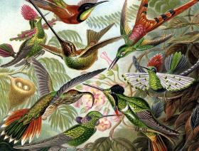 Hummingbirds - Liberty Puzzles - 1