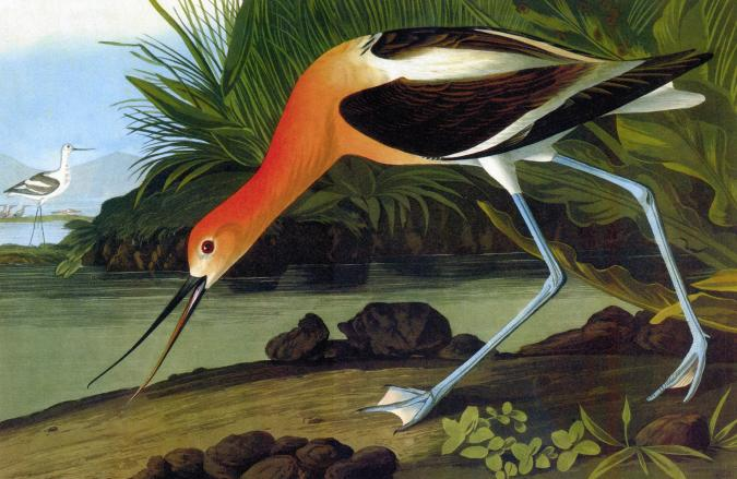 American Avocet - Liberty Puzzles - 6