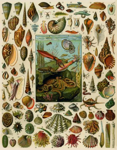 Varieties of Molluscs - Liberty Puzzles - 6