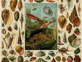 Varieties of Molluscs - Liberty Puzzles - 1