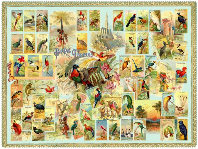 Birds of the Tropics - Liberty Puzzles - 6