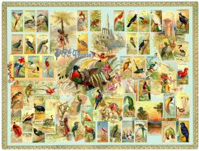 Birds of the Tropics - Liberty Puzzles - 1