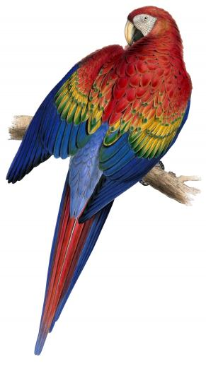 Red and Yellow Macaw - Liberty Puzzles - 8