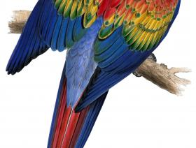Red and Yellow Macaw - Liberty Puzzles - 1