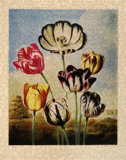 Tulips - Liberty Puzzles - 6
