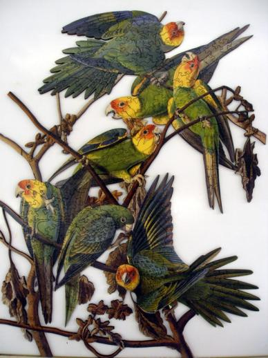 Carolina Parakeet - Liberty Puzzles - 7