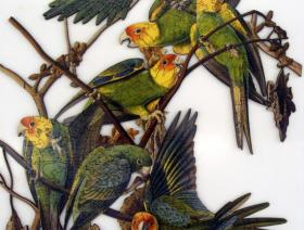 Carolina Parakeet - Liberty Puzzles - 2