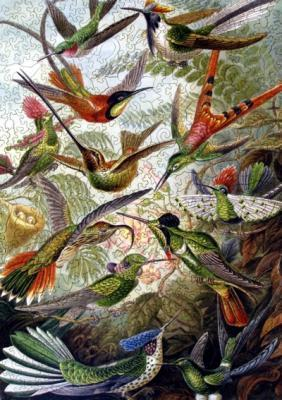 Hummingbirds - Liberty Puzzles - 7