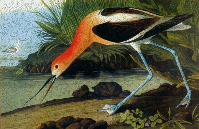 American Avocet - Liberty Puzzles - 7