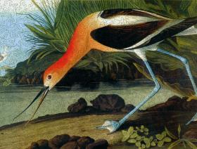 American Avocet - Liberty Puzzles - 2