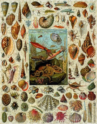 Varieties of Molluscs - Liberty Puzzles - 7