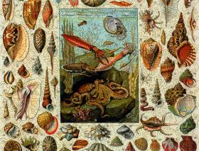 Varieties of Molluscs - Liberty Puzzles - 2