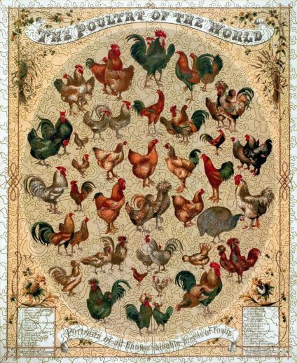 Poultry of the World - Liberty Puzzles - 7