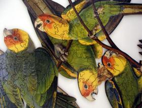 Carolina Parakeet - Liberty Puzzles - 3