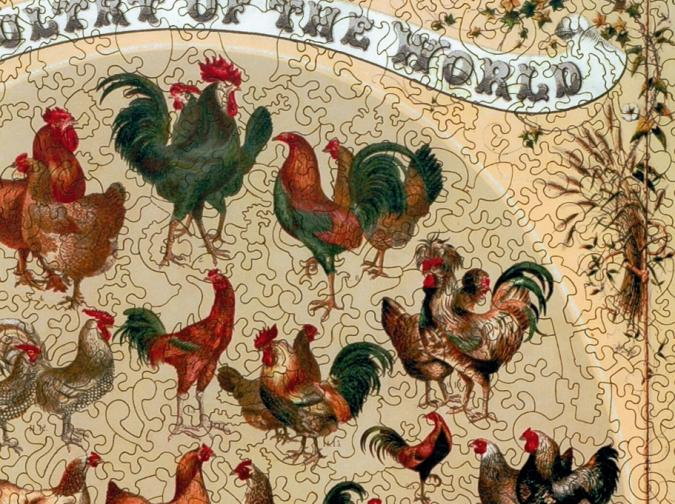 Poultry of the World - Liberty Puzzles - 8
