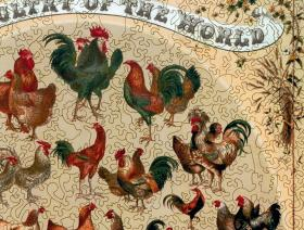 Poultry of the World - Liberty Puzzles - 3