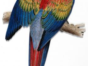 Red and Yellow Macaw - Liberty Puzzles - 3
