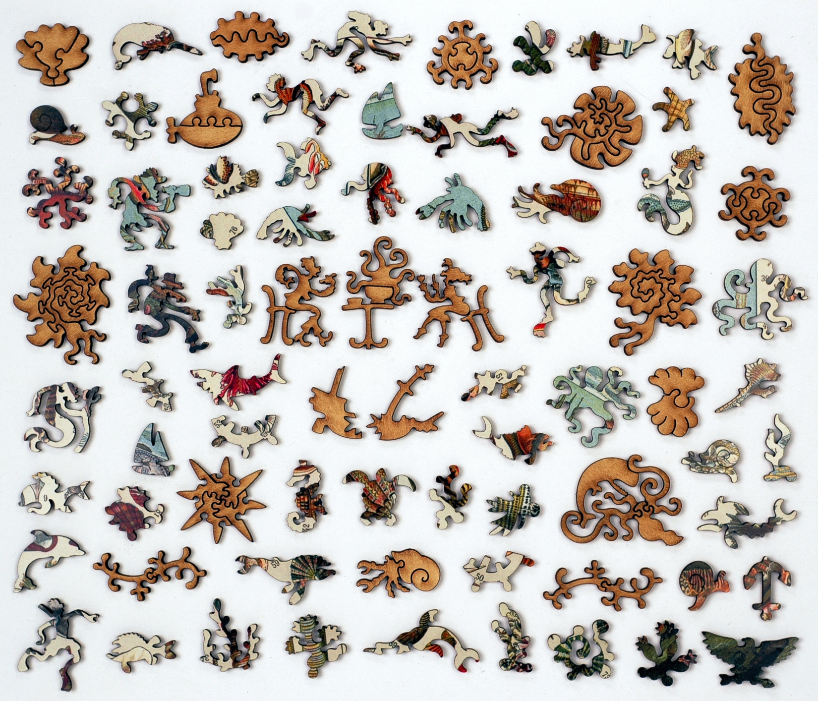 varieties of molluscs wooden jigsaw puzzle liberty puzzles