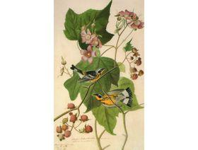 Magnolia Warbler - Wooden Jigsaw Puzzle