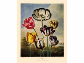 Tulips - Wooden Jigsaw Puzzle