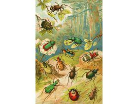 Beetles - Wooden Jigsaw Puzzle