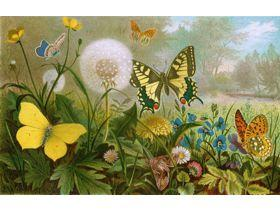 German Butterflies - Wooden Jigsaw Puzzle