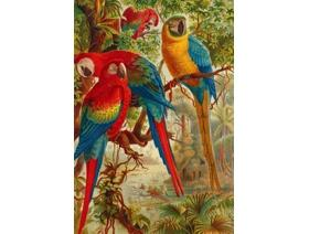 A Company of Macaws - Wooden Jigsaw Puzzle