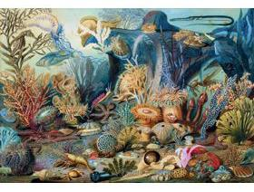 Ocean Life - Wooden Jigsaw Puzzle