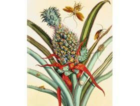 Pineapple with Insects - Wooden Jigsaw Puzzle
