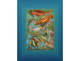 Beautiful Fishes of the Deep - Wooden Jigsaw Puzzle