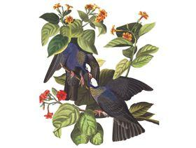 White-Crowned Pigeon - Wooden Jigsaw Puzzle